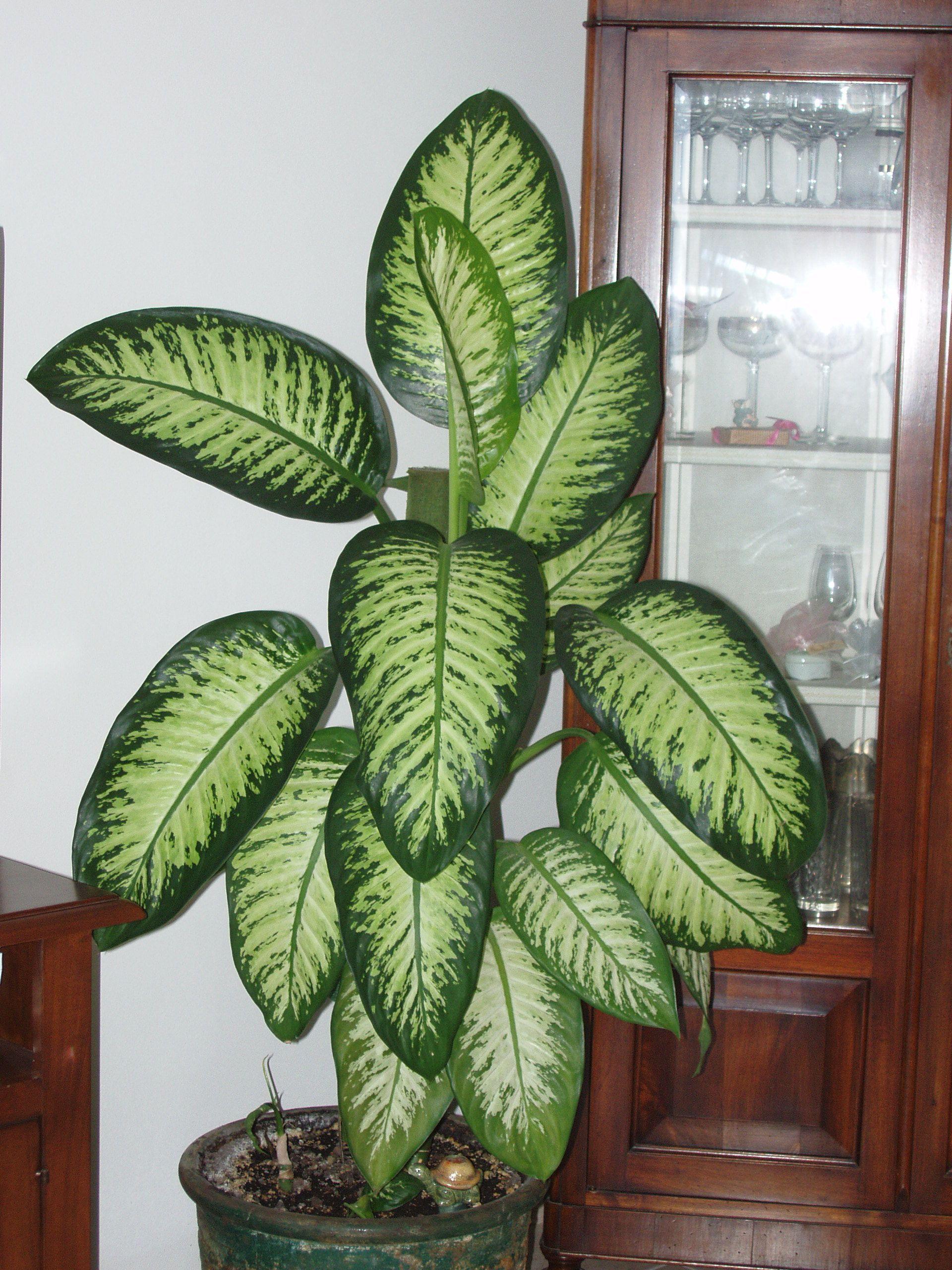 14 Houseplants That Thrive In Low Light | Indoor plants ...