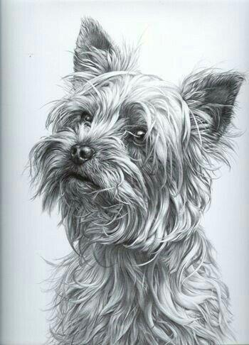 Pin by mikaa on arttttt inspo art dessin dessin dessin - Dessiner un yorkshire ...