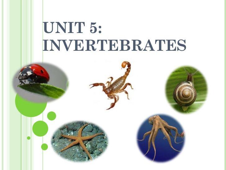 unit-5-invertebrates by Monica via Slideshare | animales