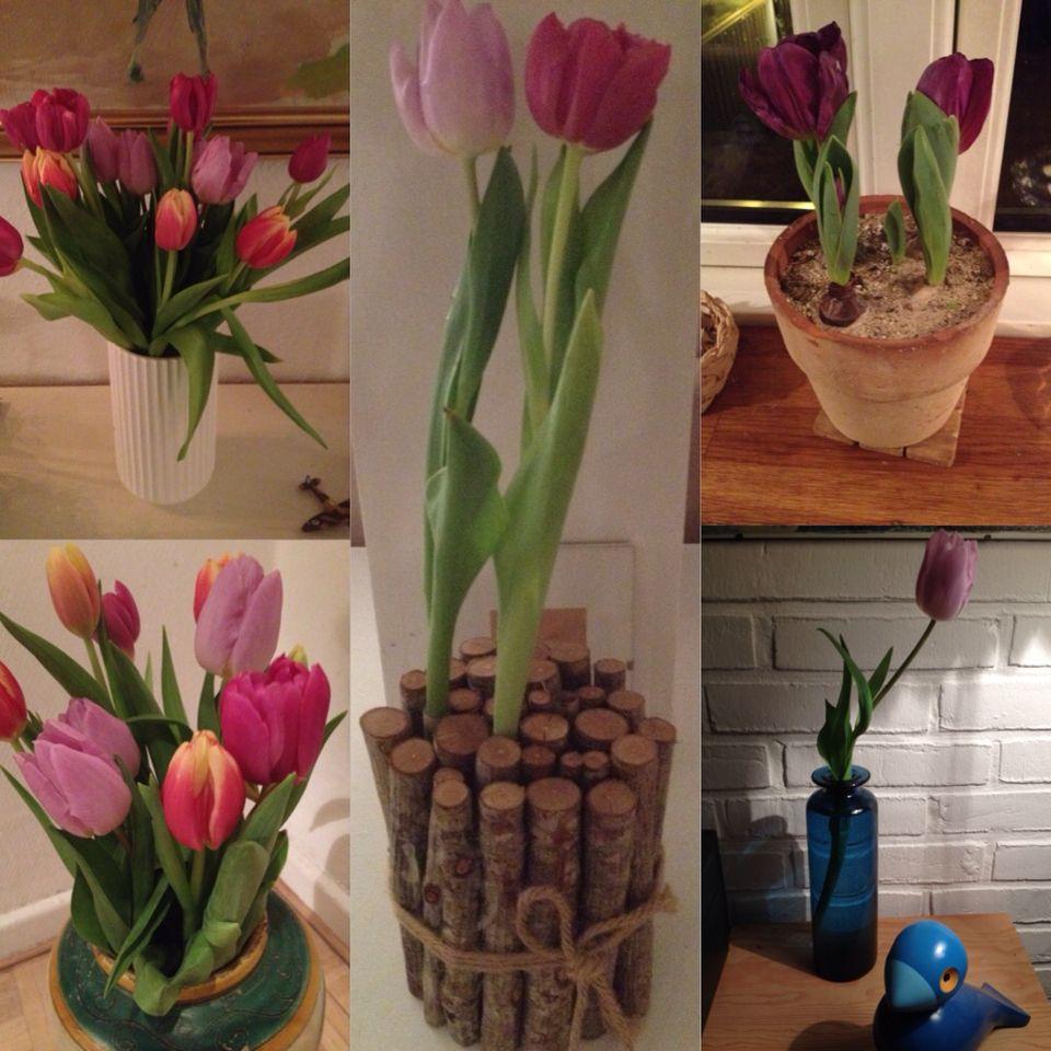 Forår tulipaner  i HELE huset.