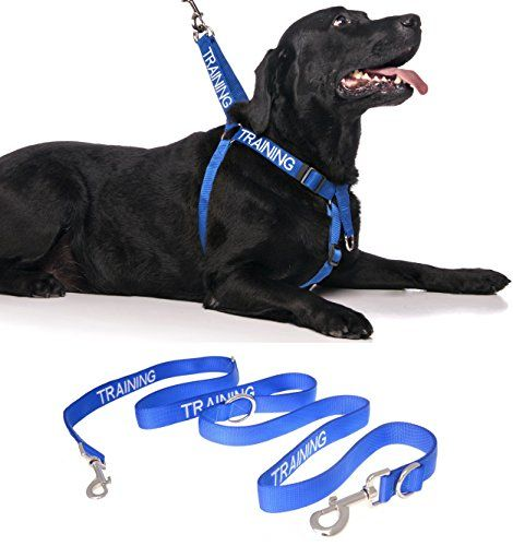Training Blue Color Coded Front Back Ring Lxl Nonpull Dog Harness