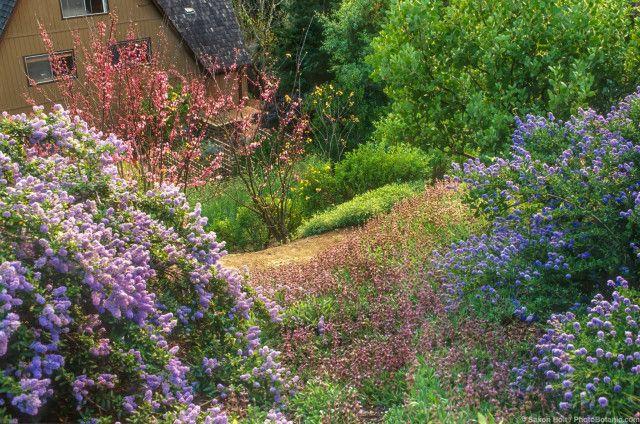 california native plant garden
