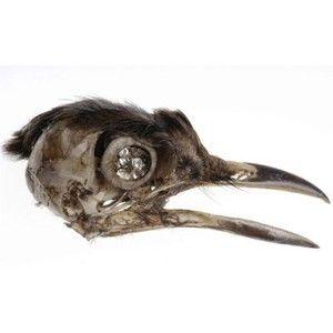 Bird Skull Brooch
