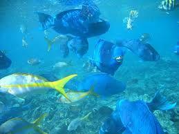 Aruba Snorkeling Did This On Bimbini Island In Aruba I Have