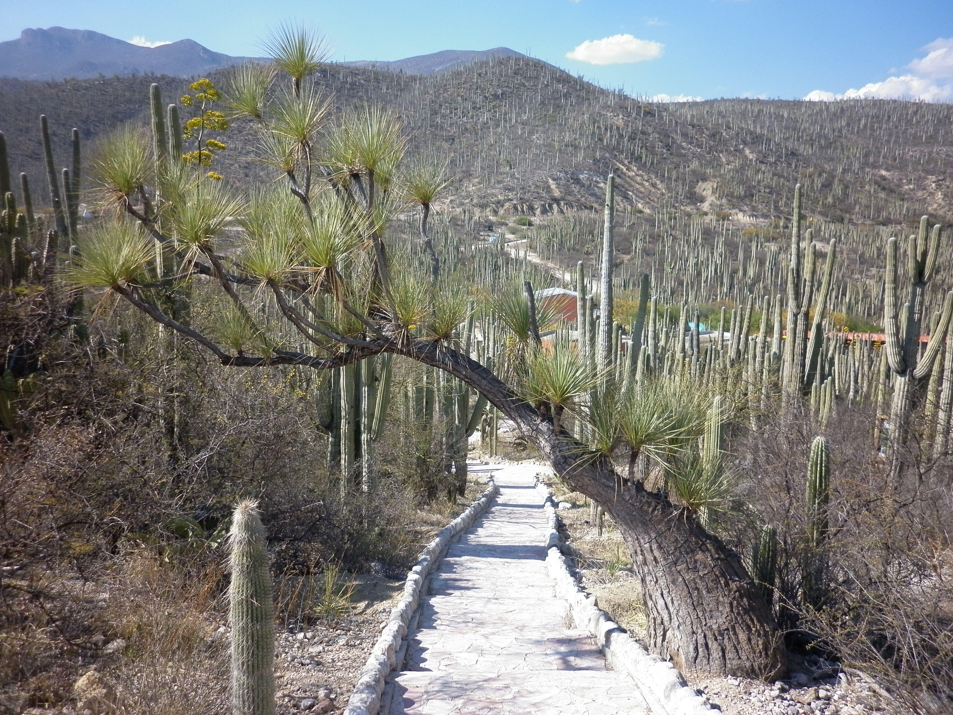 Jard N Bot Nico Reserva De La Biosfera Zapotitl N Salinas