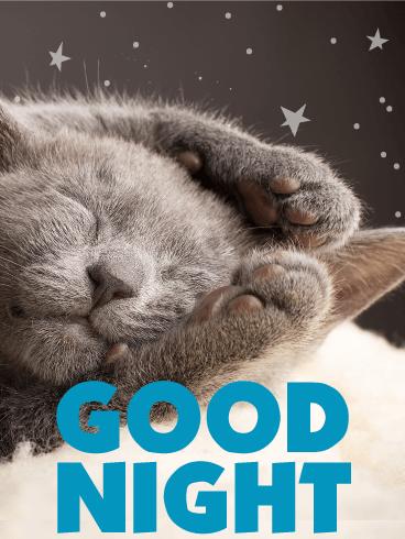 Sleeping Kitty Good Night Wish Card Birthday Greeting Cards By Davia Cute Good Night Good Night Greetings Good Night Wishes
