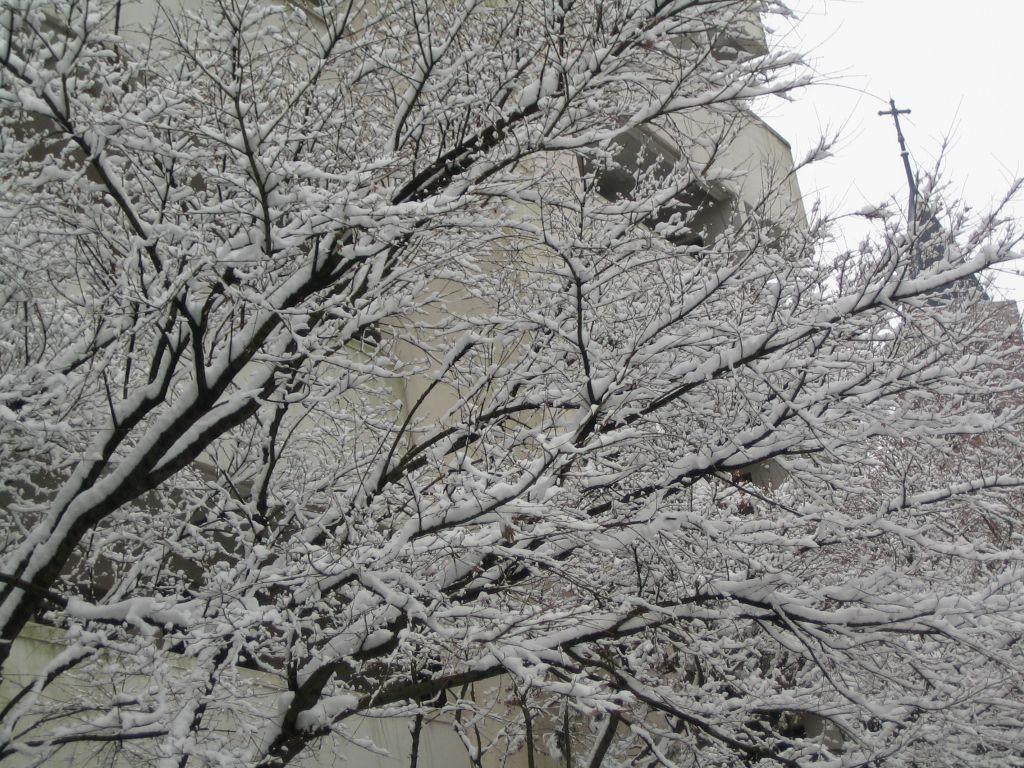 눈오는 날 방배동 성당