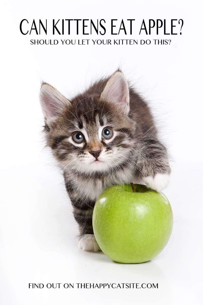 Can Cats Eat Apples A Complete Guide To Cats And Apples Cats Flea Shampoo For Cats Toxic Plants For Cats