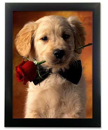 Puppy Holding A Red Rose 3d Picture 2600 Retriever Puppy Puppy