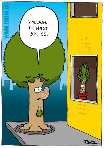 baum yucca palme yuccapalme haus straße spliss haar frisur ...