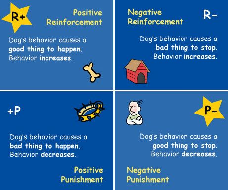 4 Quadrants Of Operant Conditioning For Refference Positive Dog