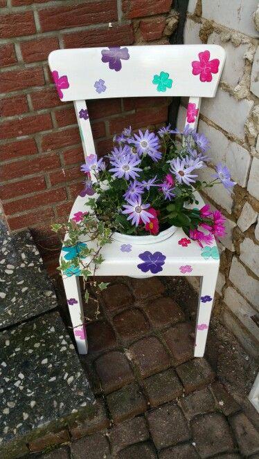 Bepflanzte Stuhle Pflanzen Und Farbe Kombinieren Pinterest