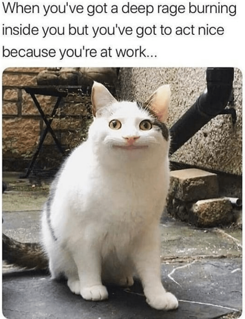 Work Related Cat Memes