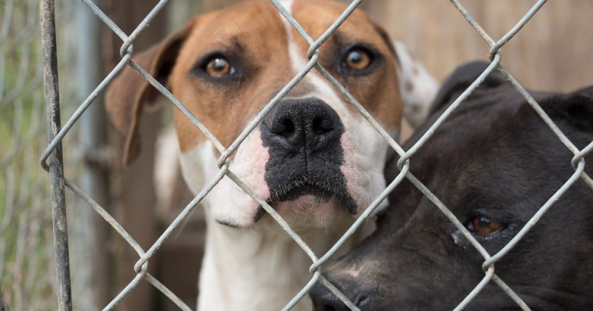 NBC: Don't Hurt Dogs!-I DO NOT WATCH OR SUPPORT THE WESTMINSTER DOG SHOW.  EVERY TIME SOMEONE BUYS A DOG, A DOG IN A SHELTER MISSES OUT ON GETTING A HOME.  SUPPORT SHELTER DOGS AND CATS.