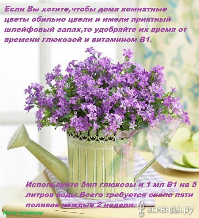 Чтобы пахли...   Красивые цветы, Лейки, Цветы в горшках