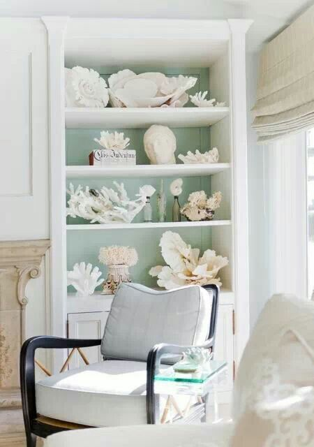 shell collection display decoration beach house decor coastal rh pinterest com