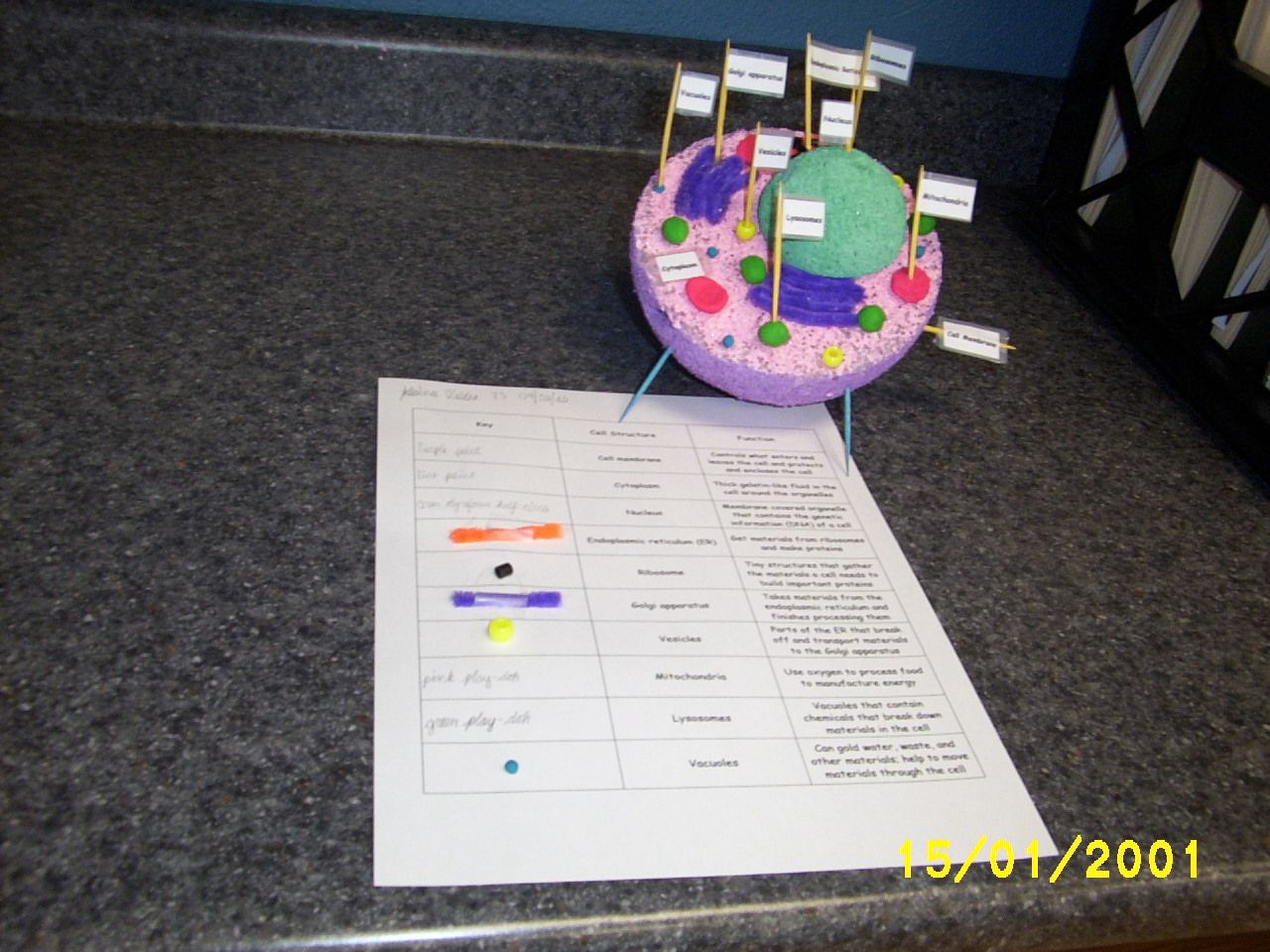 Spotlightthe 7th Grade Science Project On Plant And Animal
