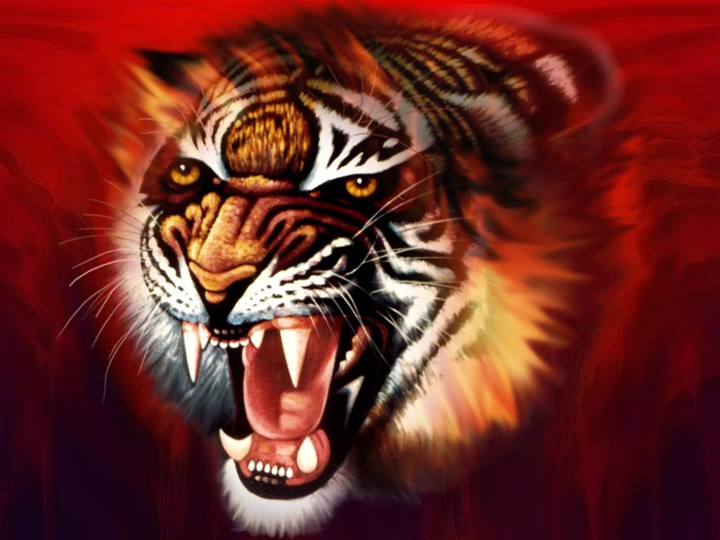 Tiger 3D HD Desktop Wallpapers 6516 - Amazing Wallpaperz ...