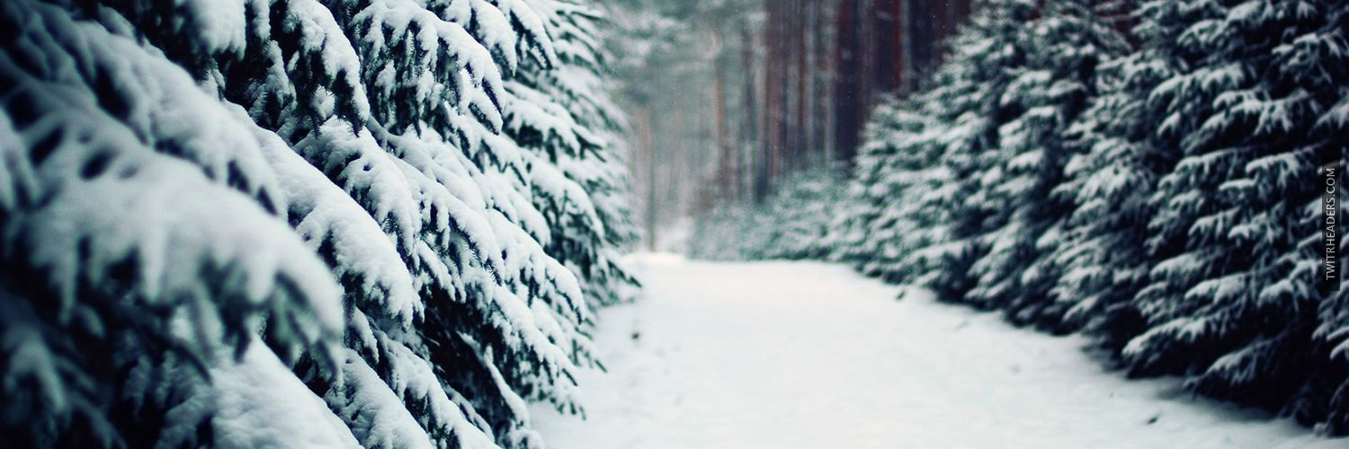 Winter Forest Trees Snow | Winter Beauty 2 | Pinterest Pictures Trees In Winter Pinterest