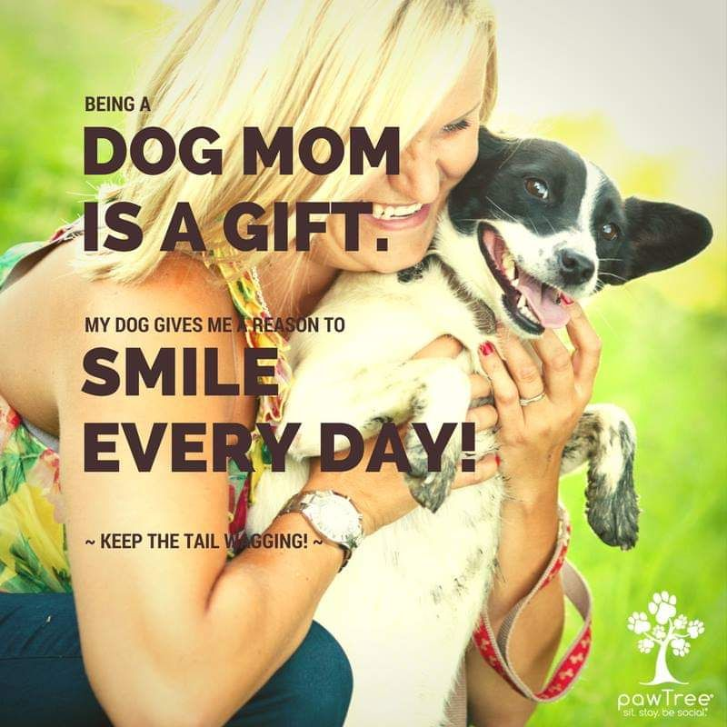 Give your dog and cat a reason to smile with pawtrees