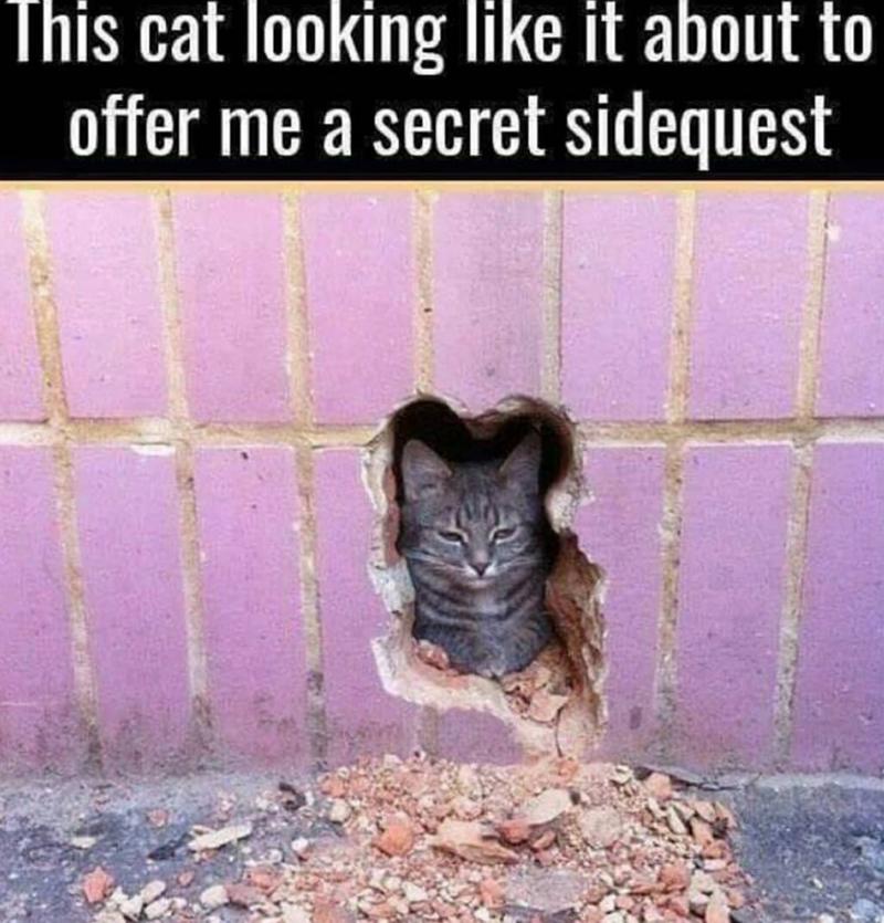 Free Kittens Craigslist Chicago - Kitten