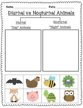 nocturnal and diurnal animal sort is a simple cut and paste activity to reinforce learning about. Black Bedroom Furniture Sets. Home Design Ideas