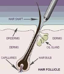 Electrolysis Electrolysis Hair Removal Hair Removal Hair Facts