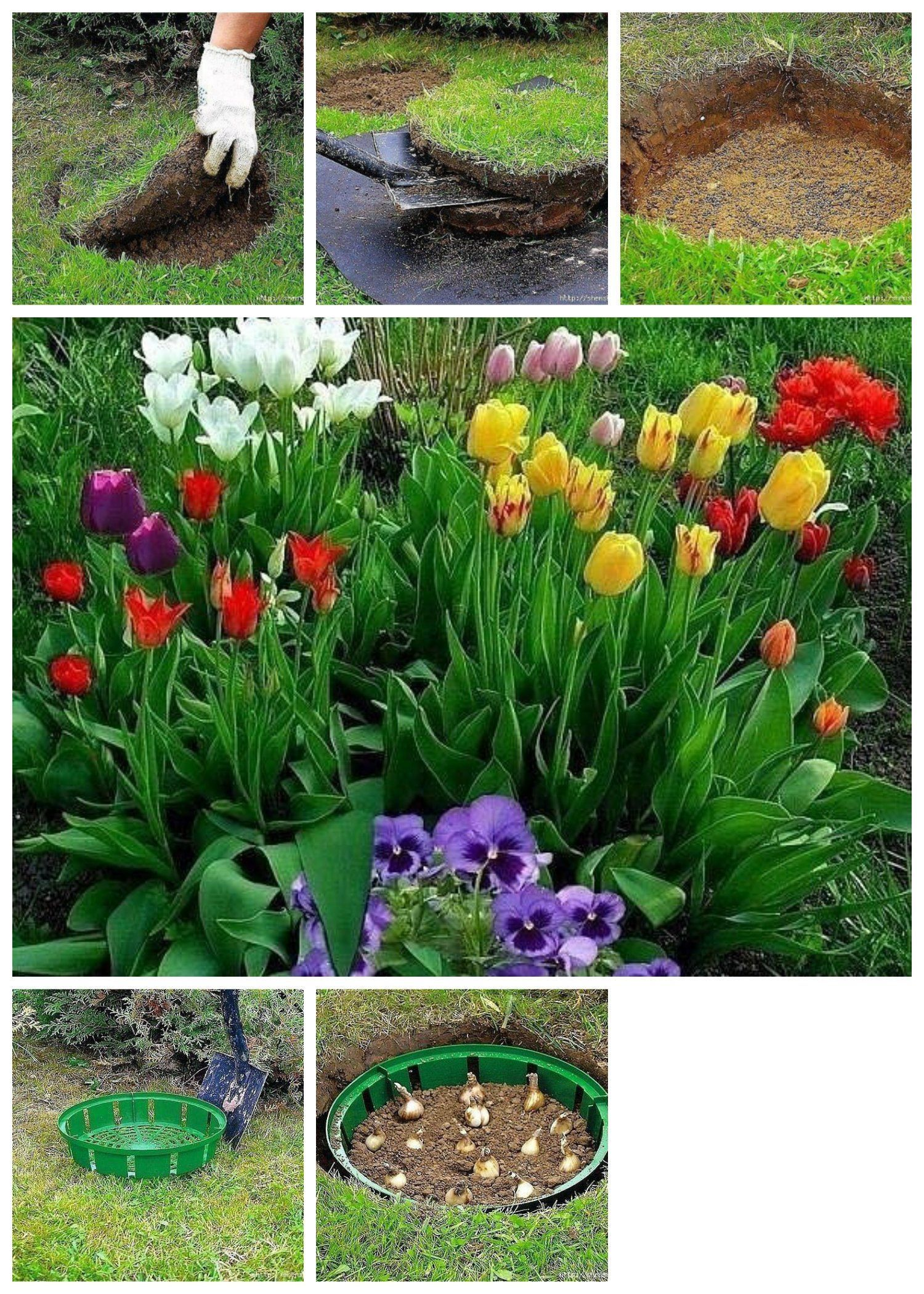 Complete Guide to Container Gardening | Planning Organic Garden ...