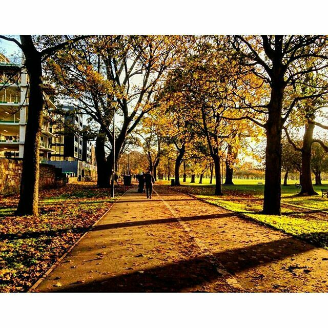 The Meadows drenched in autumn gold - our #edinphoto of the week captured by @kaybarbss. Post your photos of Edinburgh with #edinphoto for the chance to be featured on our page. #thisisedinburgh #Edinburgh #edinphoto #themeadows #park #autumn #trees #leaves #autumnleaves #sunlight #path #igersedin #igersedinburgh #igersscots #igersscotland #instascots #instascotland #scotland #brilliantmoments  #lovescotland