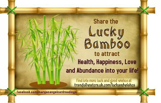 Lucky Bamboo Angel Quotes Good Luck Good Luck Wishes Lucky Bamboo