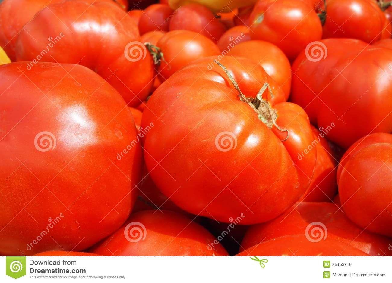Many, fresh tomatoes without background