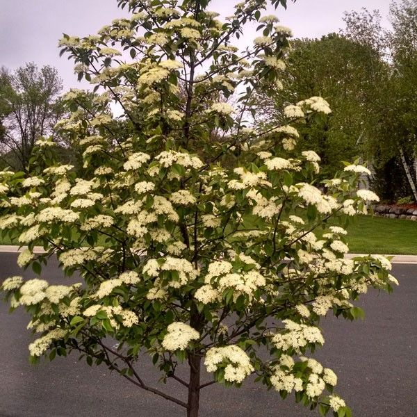 Largest Online Selection Of Trees Plants Shrubs And Perennials We Re The Oldest Nursery In Wisconsin