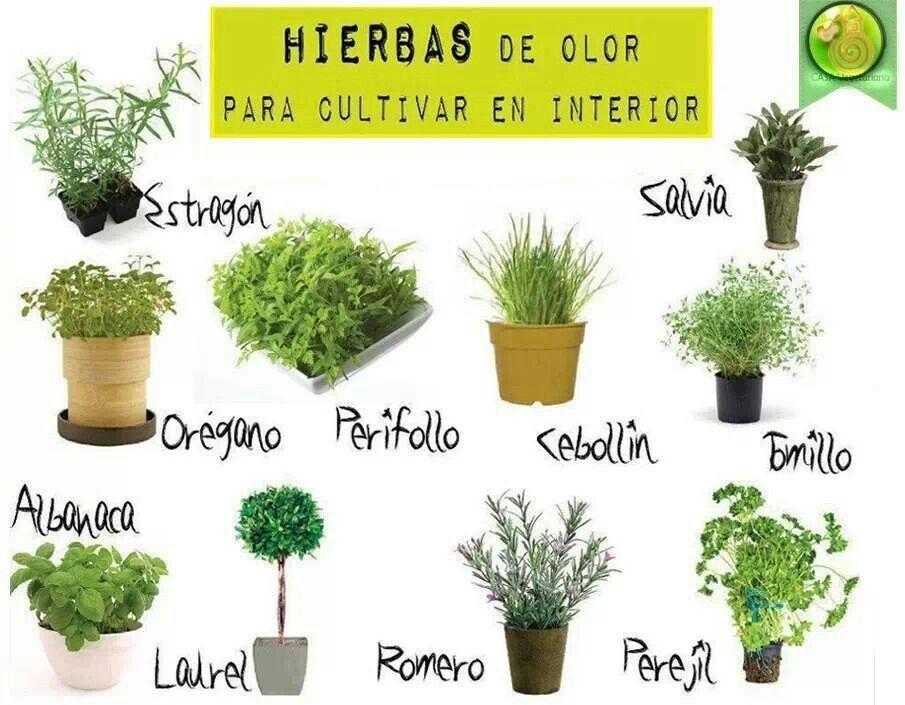 Hierbas de olor para cultivar en el interior jardiner a pinterest huerto plantas y cultivar - Plantas aromaticas jardin ...