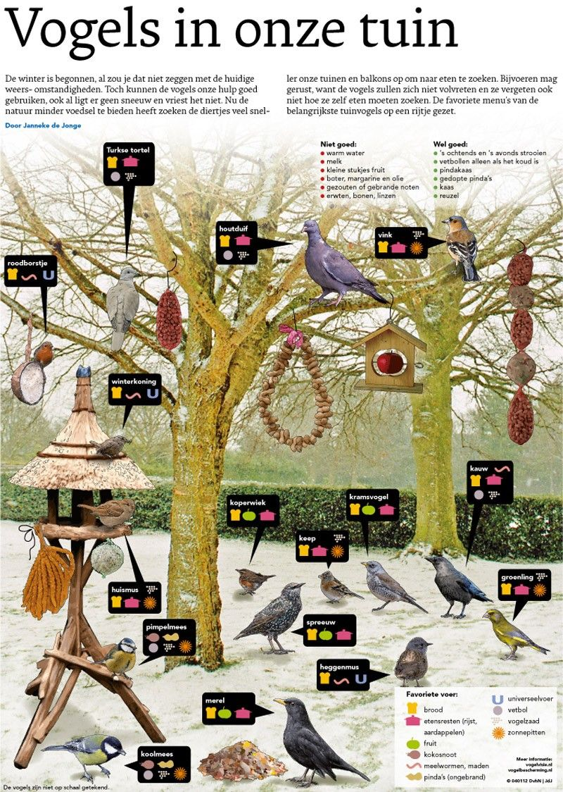 Pin Van Bram De Wilde Op Winter Vogels Vogeltjes Vogel Voeder