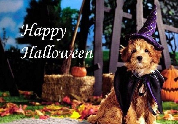 Cute Halloween Wallpapers For Animal Lovers Dog Halloween Halloween Wallpaper Dog Halloween Costumes