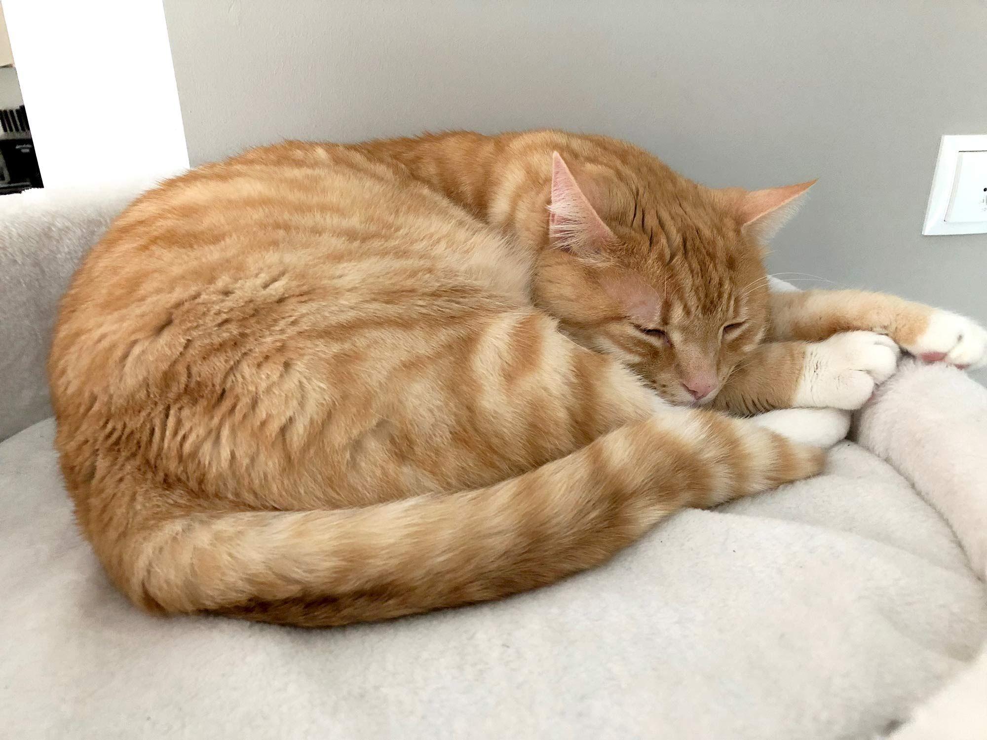 Rote Katzen Warum Sind Sie So Besonders Rote Katze Katzen Katzen Kaufen