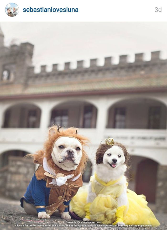Who S Not Scary These 10 Cute Halloween Dogs In Costume With
