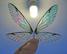 Butterfly Wing & Doll Eyes Creator CD-rom, ooak doll fairy wings glass eye iris