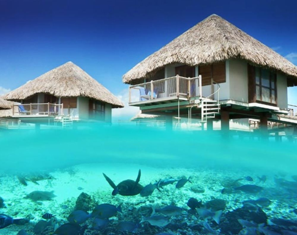 Beautiful Tahiti Over The Water Bungalow Check More At Http Www Jnnsysy