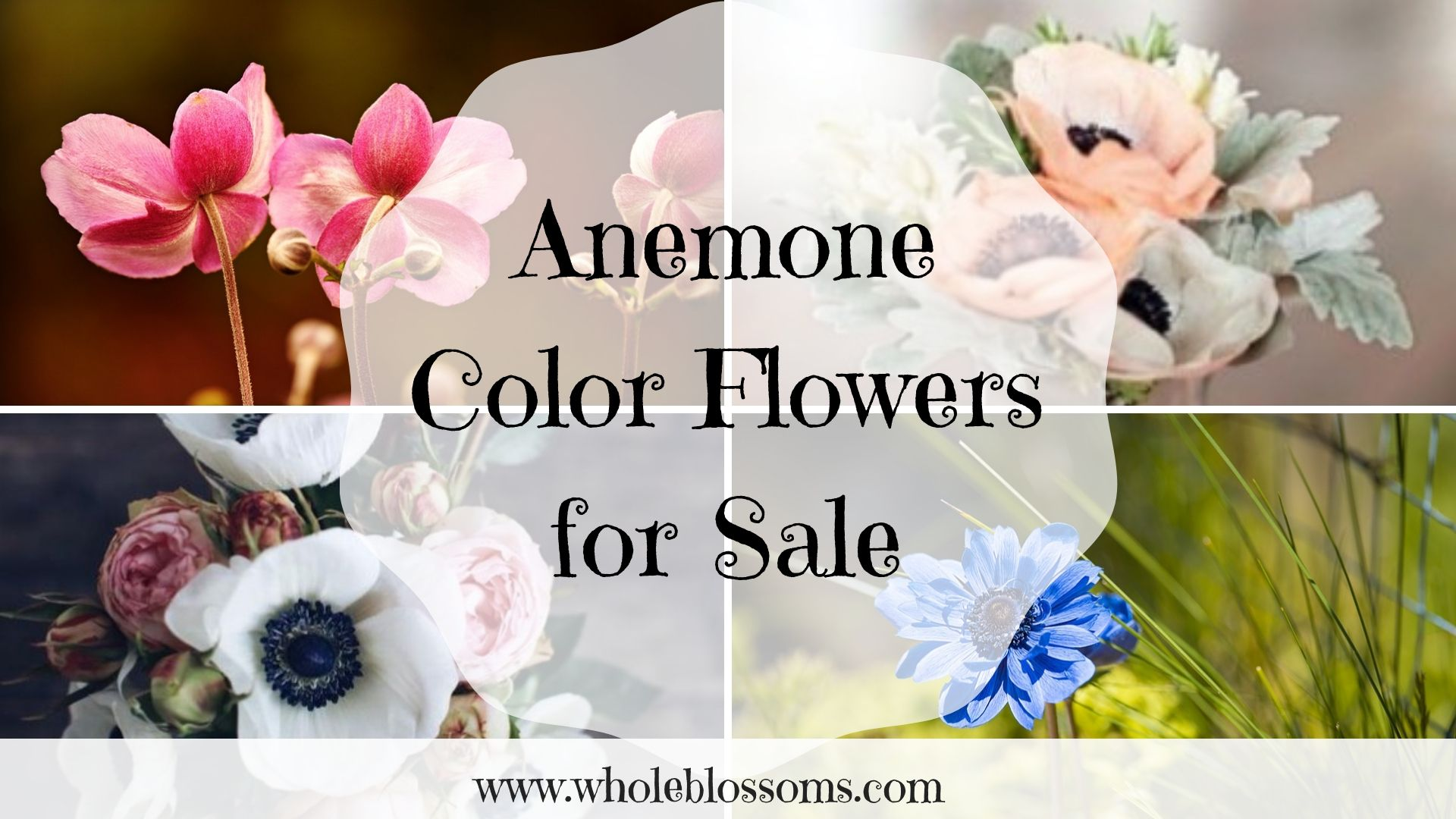 Anemone Flower Is Very Classical And Popular Flowers For Arranging Centerpieces And Bouquets As They Get Older Flowers For Sale Anemone Flower Popular Flowers
