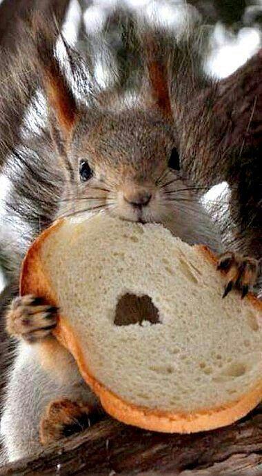 Squirrel Enjoying A Slice Of Bread
