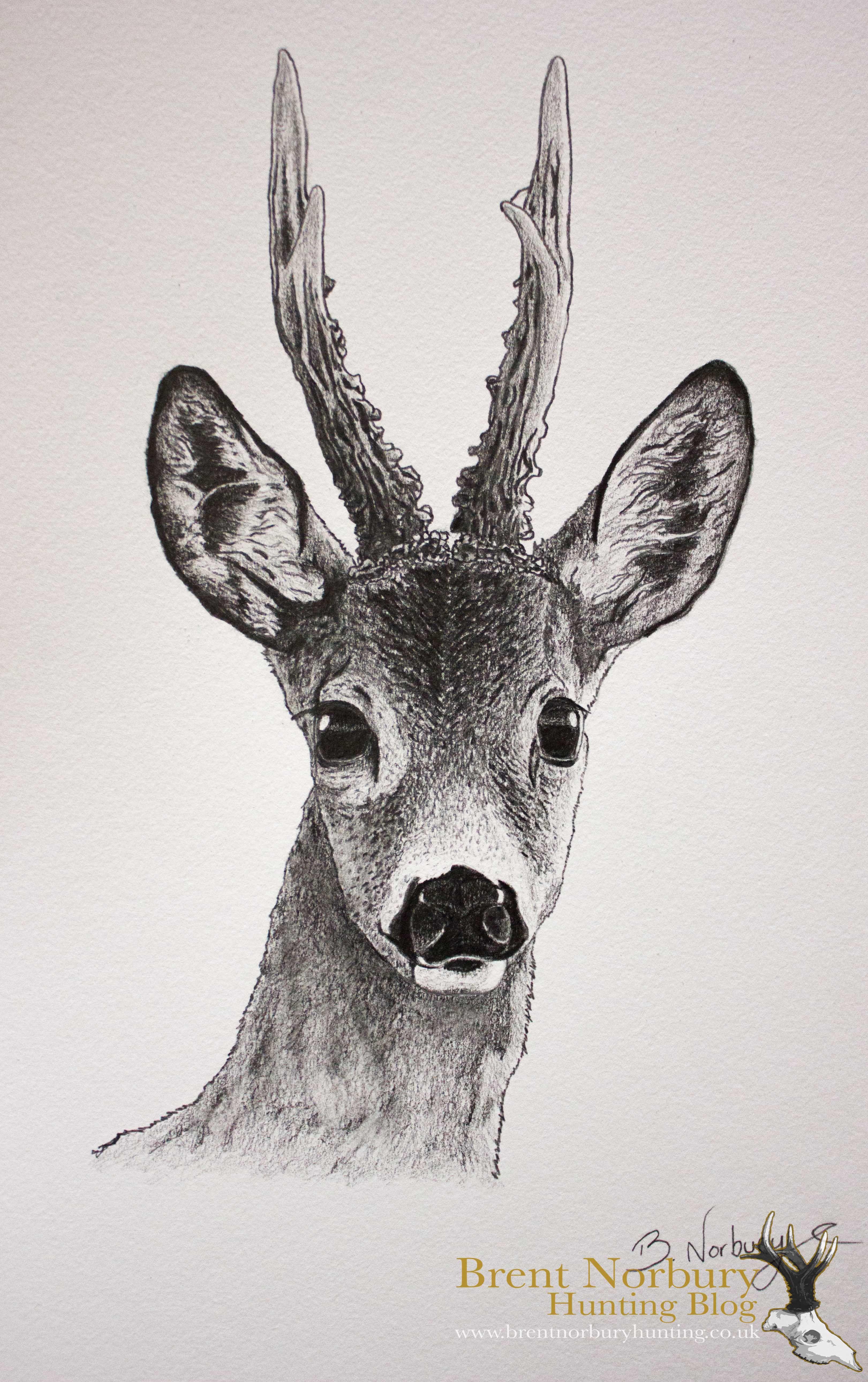 Roe deer drawing google search artworks pinterest chevreuil cerf and dessin - Dessiner un cerf ...