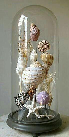 Bijzondere Woonkamer Decoratie Met Deze Stolp Schelpenknutsels Schelpendecoratie Decoratie Ideeen