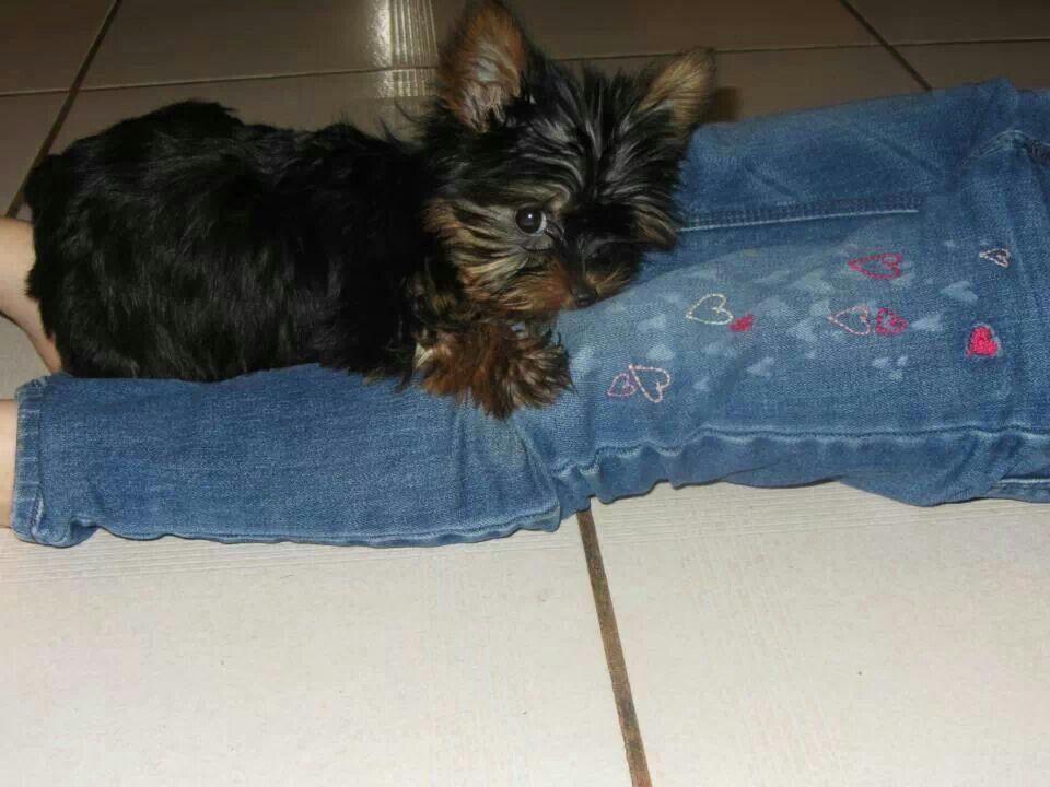 Awe my puppy :)