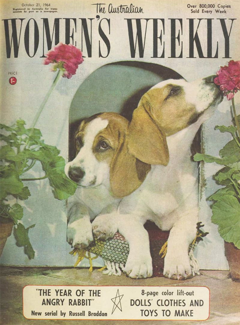Beagles The Australian Women S Weekly 21 October 1964 Cute