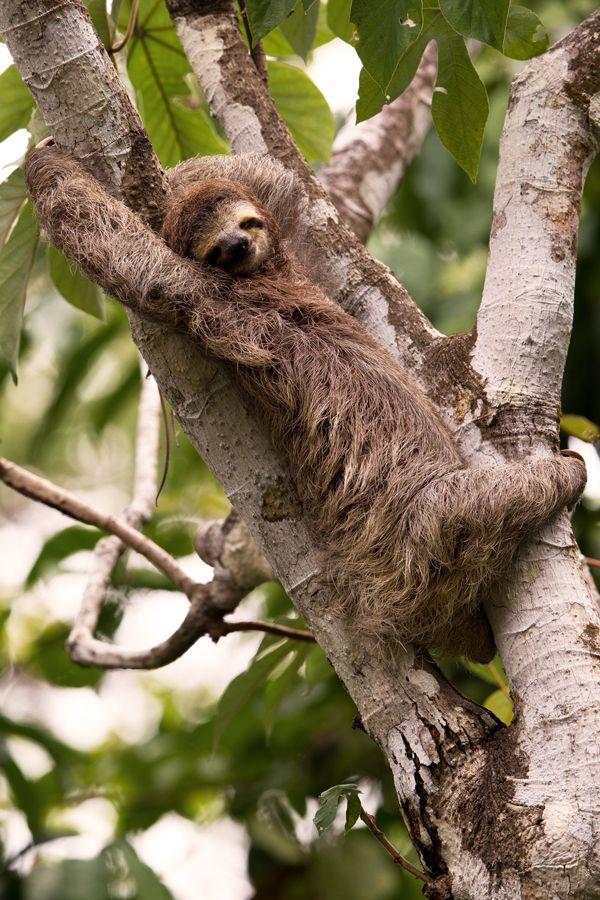Wildcat Expedition In Corcovado Lapa Rios Costa Rica Wildlife Corcovado National Park Rainforest