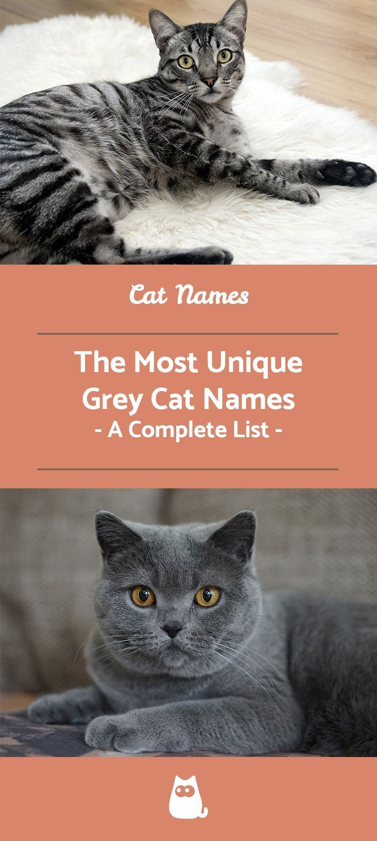 Grey Cat Names for Male and Female Over 40! Grey cat