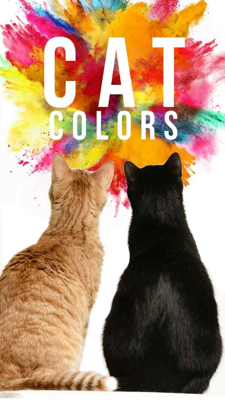 Cat Colors Unravelling The Secrets Of Cats Beautiful Coats In 2020 Cat Colors Cats Cat Breeds