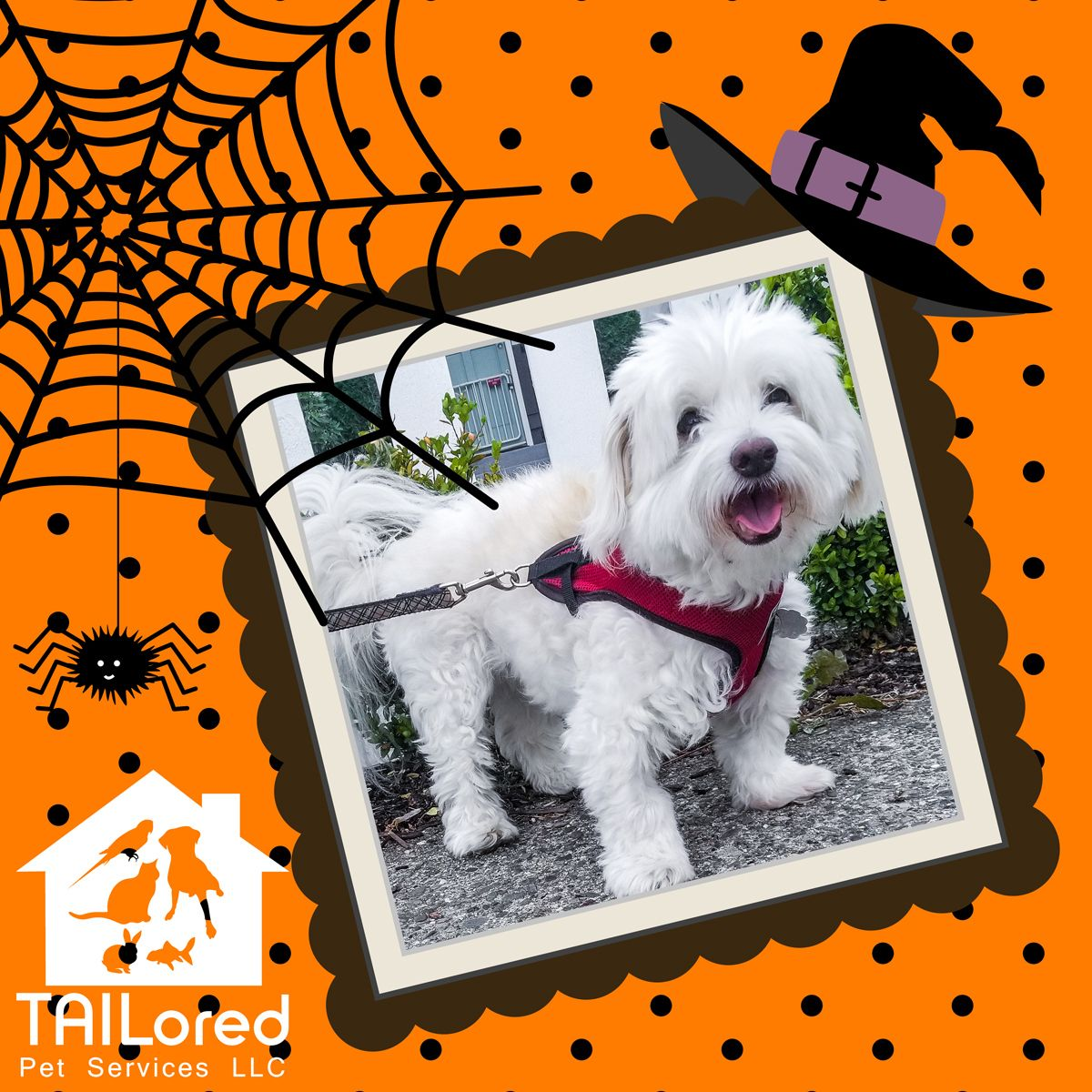 Halloween Tip 6 Neige Is Smiling Because He Knows His Mom Will Keep Electric And Battery Powered Halloween Decoratio Spoiled Pets Puppy Palace Service Animal