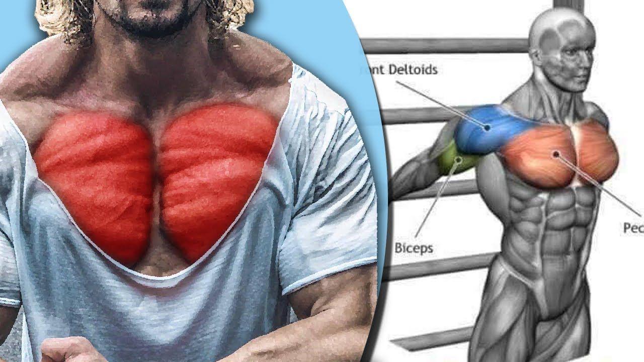 New Video By مهووس عضلات كمال الاجسام On Youtube كيف تحصل على عضلة صدر كبير و جذاب تمارين الصدر تضخيم الصدر تفجير عضلة الصدر تقوية Jackets Fashion Athletic